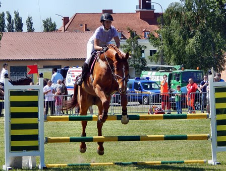 The Horse, Galop, Horses, Hooves, Animal, Jump