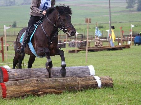 Riding, The Horse, Jumping, Obstacle Course, Obstacle