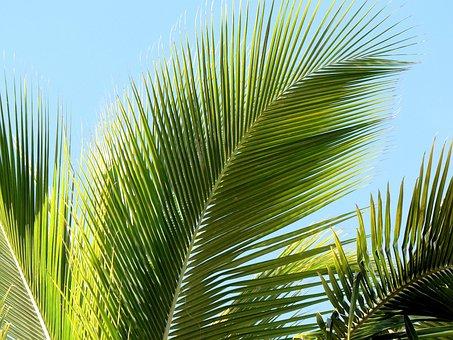 Tropics, Palm Leaf, Palm, Leaf, Indented, Holiday