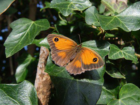 Butterfly, Sussex, Uk, Nature, Wildlife, Insect