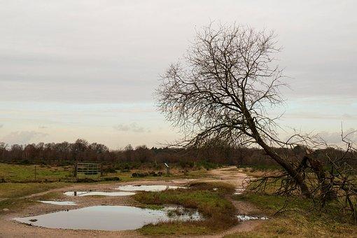 Heide, Tree, Puddle, Nature Reserve, Hiking, Landscape
