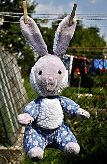 Rabbit, Toy, Hanging, Ears, Puppy, On The Line, Drying
