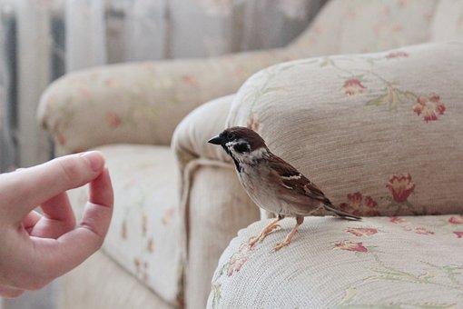 Sparrow, House, Bird, Birds, Sparrows, Manual, Home