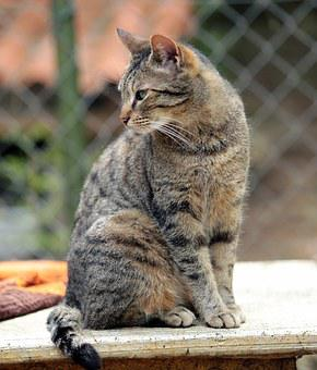 Katze, Hauskatze, Cat, Animal, Pets, Domestic Animal
