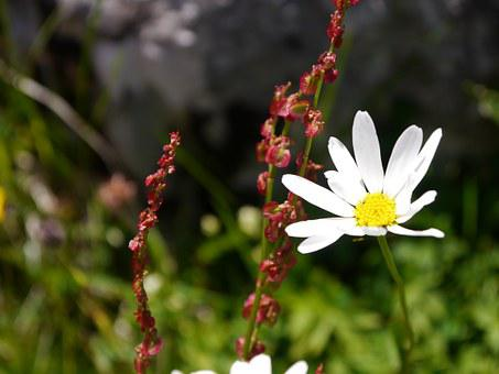 Flower, Meadow, Blossom, Bloom, Nature, Plant