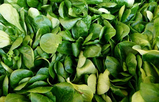 Valerianella Locusta, Corn Salad, Common Cornsalad