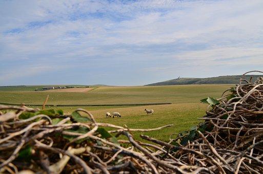 Sheep, Lighthouse, Countryside, Belletout, Nature, Farm