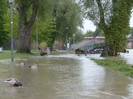 High Water, Danube, Ulm, Disaster, Destruction, Ducks