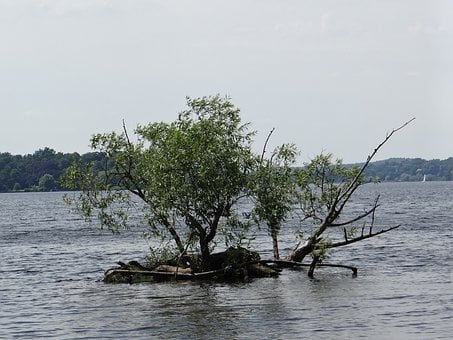 Tree Under Water, Forces Of Nature, Lake, Landscape