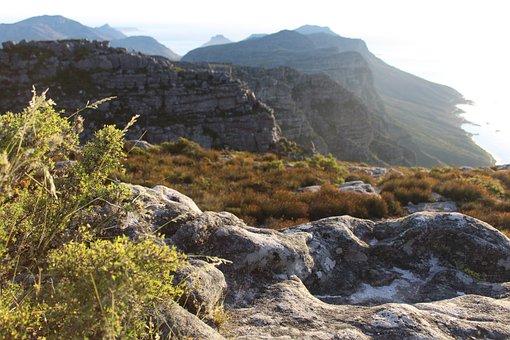 Fynbos, Table Mountain, Cape Town, Peak, Landscape