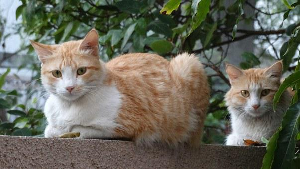 Cats, Looking, Two Cats, Domestic, Cute, Kitten, Pet