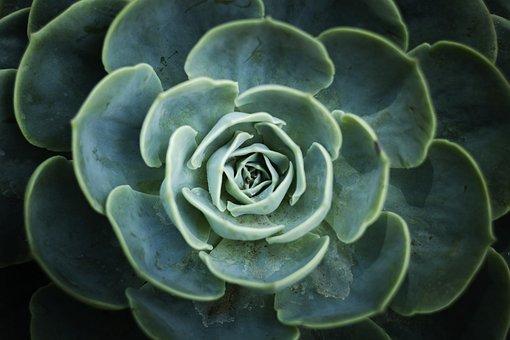 Natural, Plants, Flowers, Nature, Green, Macro, Wild