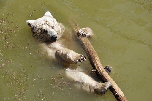 Bear, Sweet, Animals, Teddy, Lazy, Rest, Animal World