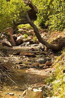 Kolob Canyons, Taylor Creek Trail, Zion National Park