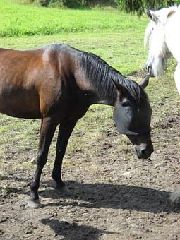 Amerikanravuri, Any Warm-blooded, Race Horse