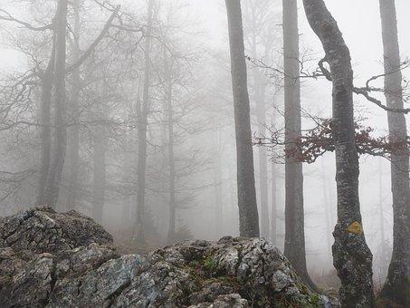 Forest, Book, Foggy, Haunting, Mystical, Beech Wood