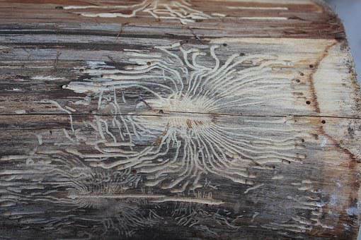 Tree Bark, Worm, Insect, Beetle, Woodworm