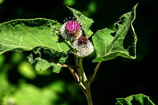 Inflorescence, Blossom, Bloom, Garden Plant, Flower