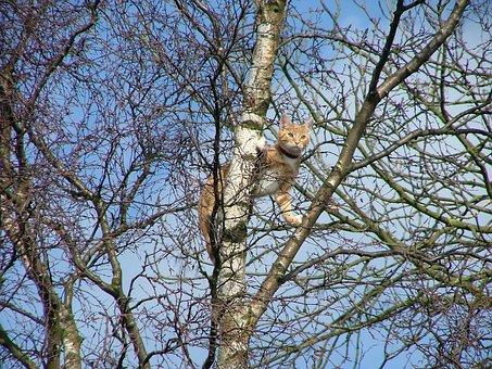 Ginger, Cat, Stuck, Tree, Aldridge, West Midlands