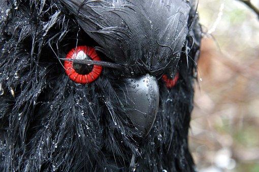Crow, Halloween, Celebration, Party, Wet, Bird