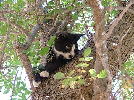 Cat, Tree, Black, White, Stuck, Greece, Chalki