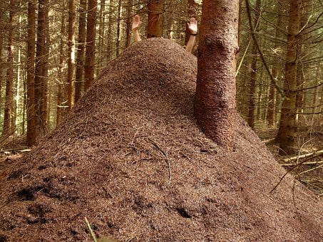 Forest Ant Hill, Huge Hill, Wood Ants, Ants, Formica