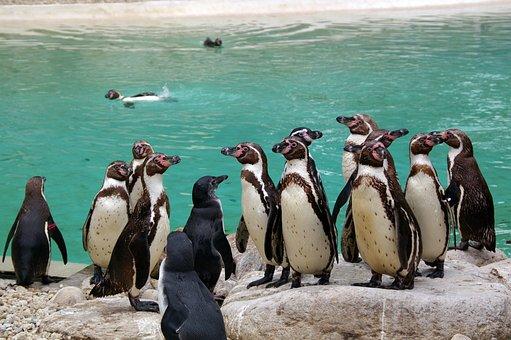Zoo, Animals, Tree, Water, Park, Animal Park, Nature