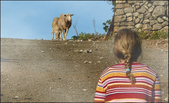 Animal, Animals, Sheep, Steinig, Two, Girl, Child