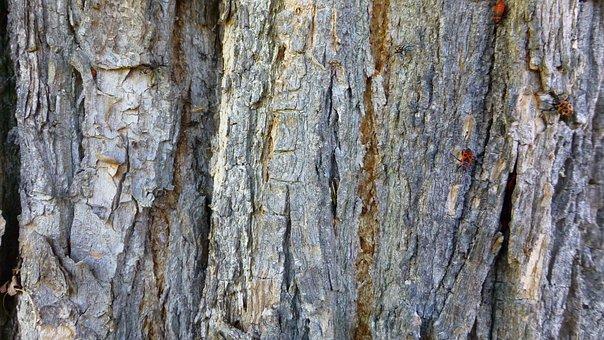 Tree, Bark, Wood, Structure, Beetle