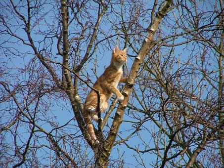 Cat, Stuck, Tree, Ginger, White, Tabby, Domestic