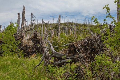 Forest, Waldsterben, Bark Beetles