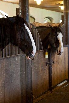 Animal, Animals, Barn, Corral, Door, Farm, Gate, Head