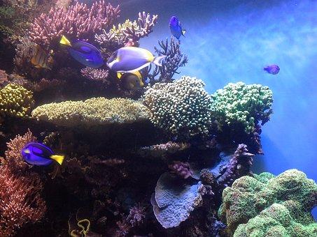 Coral Reef, Corals, Aquarium, Monterey Bay Aquarium