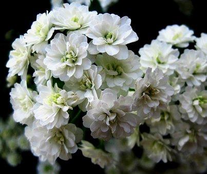 Flower, Wildflower, Flowerhead, Floral, Plant, Natural