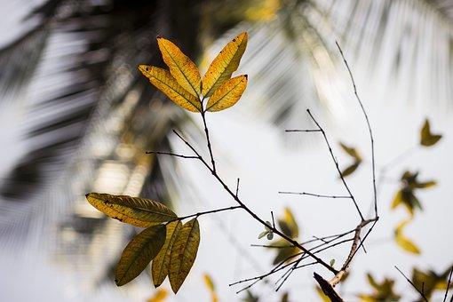 Focus, Green, Leaf, Nature, Nature Wallpaper, Shadows