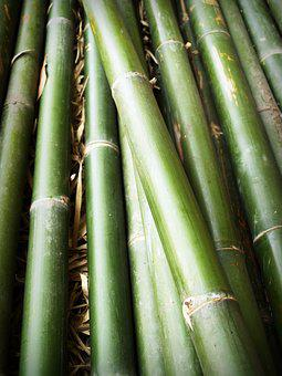 Bamboo, Forest, Japan, Background, Tree, Outdoor