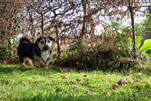 Doggy, Animal, Animals, Dog, Pet, Jack Russell, Garden