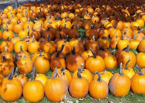 Pumpkins, Autumn, Fall, Seasons, Seasonal, Orange