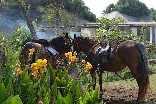 Horse, Green, Nature, Smoke, Plant, Flowers, Flower