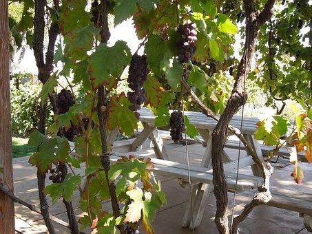 Arbor, Grapes, Fruit, Grape, Vine, Leaves, Plants, Leaf
