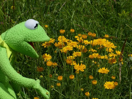 Kermit, Frog, To Watch, Admire, Beautiful, Flowers
