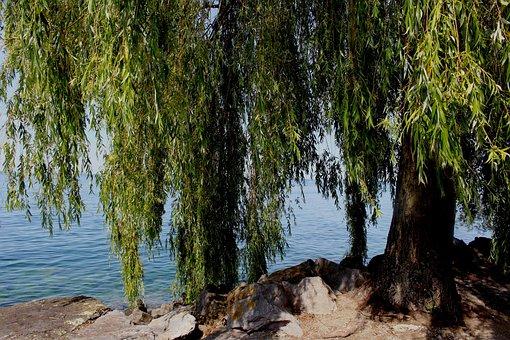 Weeping Willow, Tree, Atmosphere, Lake, Bank, Stones