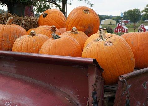 Autumn, Fall, Orange, Colors, Nature, Red, November