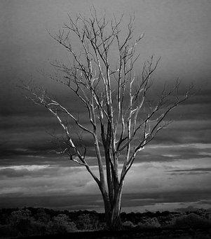 Tree, Dead, Winter, Branches, Limbs, Autumn, Fall, Mono