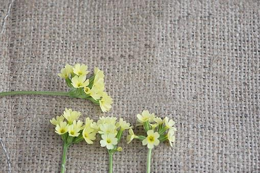 Cowslip, Yellow, Flowers, Yellow Flowers, Four, Piece