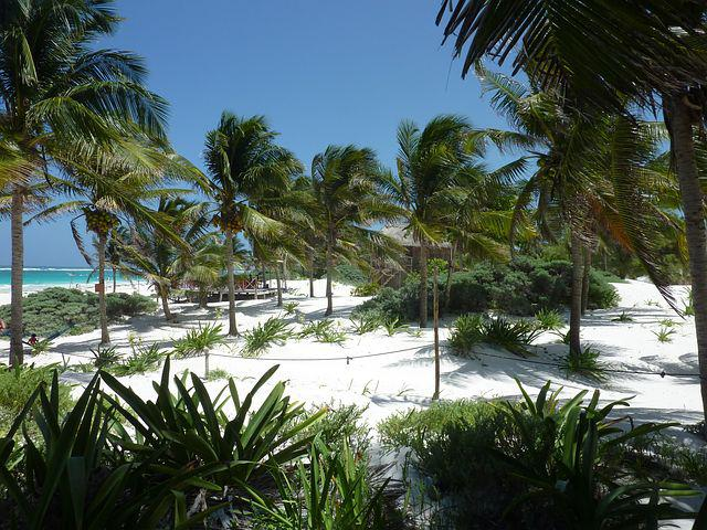 Palm Trees, Beach, Sand, Caribbean, Exotic, Holiday