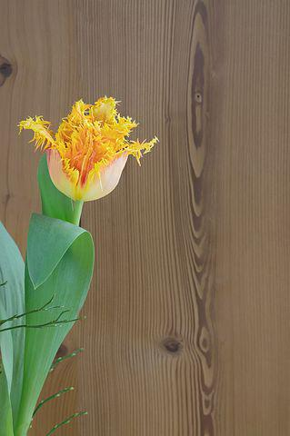 Flower, Tulip, Blossom, Bloom, Yellow Orange, Wood