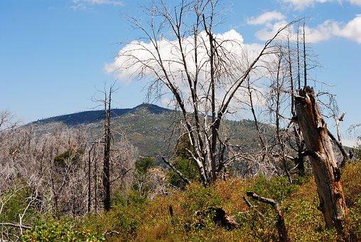 Forest Fire, Dead Trees, San Diego, La Jolla