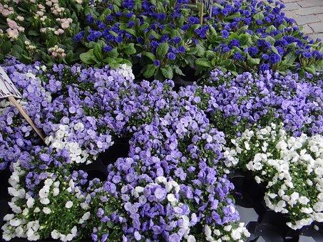 Flower Market, Denmark, Funen, Bluebells