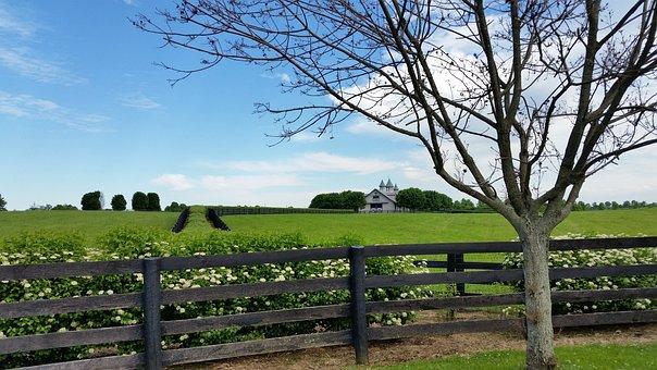 Horse Farm, Kentucky, Lexington, Horse, Farm, Grass